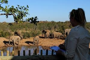 Voluntaria de Conservación identiicando elefantes en reserva de Botsuana