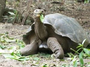 Volunteering with Projects Abroad in the Galapagos