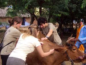 Veterinary Medicine in India