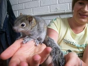 Squirrel (Animal Centre)