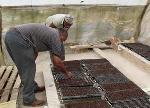 Voluntario y granjero sembrando en Jamaica