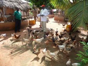 Volunteer Abroad on a Farm in Togo with Projects Abroad