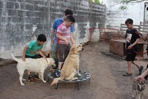 Niños jugando con perros entrenados en una sesión de terapia canina en Argentina