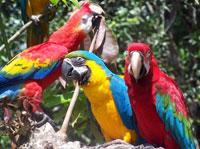 7-Day Peru Conservation Project - Macaw Display