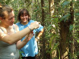 Voluntaria del proyecto de Conservación en Cambodia trabajando en terreno en el conteo de orquídeas en la junga.