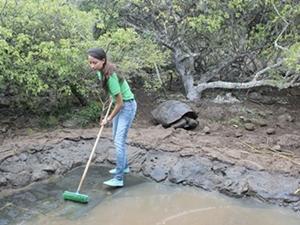 Voluntaria de Projects Abroad realizando labores con tortugas en el Proyecto de Conservación en las Islas Galápagos