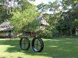 Conservación de la Selva Tropical