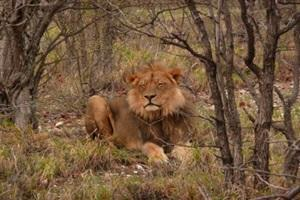 Cheeeetah in South Africa