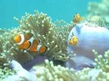 Buceo y Conservación Marina