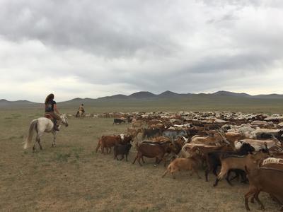 Voluntaria cuidando del ganado en proyecto Nómada