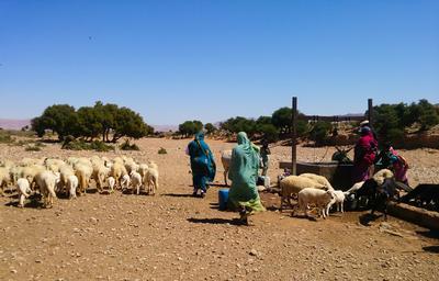 Voluntaria ayudando a su familia hospedera en Marruecos