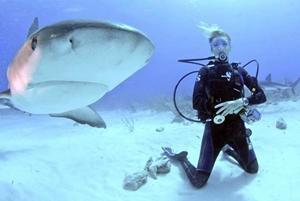 Proyecto de Conservación de tiburones en Fiyi Especiales dos semanas