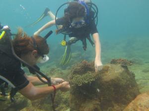 Voluntarias del especial para adolescentes de Projects Abroad realizan una investigación submarina en Camboya, Asia