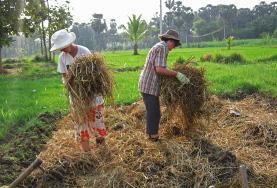 Agricultura y cultivo