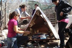 Building shelters for the dogs