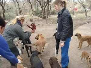 Interns at the dog home