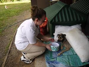 Un voluntario de Projects Abroad da agua a un perro en el proyecto de cuidado animal en Belice