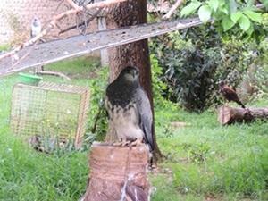 Cuidado de Animales en Bolivia