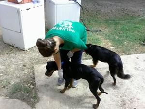 Voluntarua de Projects Abroad en el proyecto de Cuidado de Animales trabaja con dos perros en un centro de rescate en Jamaica