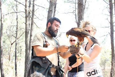 Una voluntaria de Projects Abroad en el proyecto de Cetrería en México recibe ayuda de una miembro del personal local durante una sesión de entrenamiento.