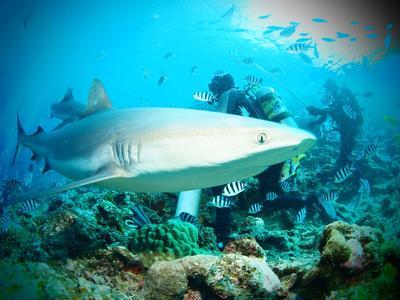Voluntarios explorando arrecife en su proyecto de Conservación de Tiburones
