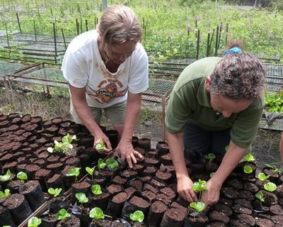 Voluntarios reforestando durante su proyecto de Conservación en Ecuador