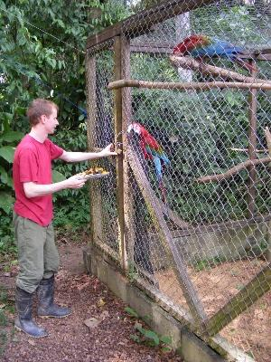 Volunteer feeding the parrots in Peru